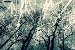 Avlövade kala träd över himmelbakgrund, collage arkivbilder