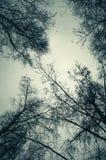 Avlövade kala träd över molnig himmel royaltyfri foto