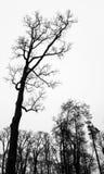 Avlövade kala träd över vit himmel vertikalt royaltyfria foton
