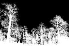Avlövade kala träd som isoleras på svart arkivbilder