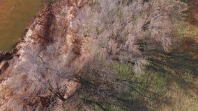 Avlövade träd från över in vinter lager videofilmer