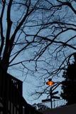 Avlövade träd i höstkontur, i parkerar område Skymning av skymning Och ljuset från lampan För bakgrunden dött träd royaltyfri bild