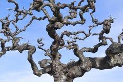 Avlövade trädfilialer mot den blåa himlen Arkivbild