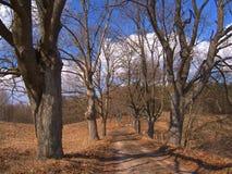 avlövade trees fotografering för bildbyråer