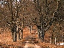 avlövade trees royaltyfri bild