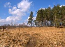 avlövade trees arkivfoton