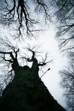 Avlövade Trees Arkivbild