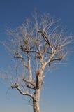 Avlövat träd Royaltyfri Bild
