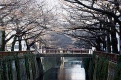 Avlövat träd för körsbärsröd blomning längs den Meguro floden på FEBRUARI 11, 2015 i Tokyo Royaltyfri Fotografi