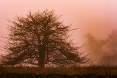 Avlövat träd i en djup dimma på Grayson Highlands State Park, Virginia Royaltyfri Fotografi