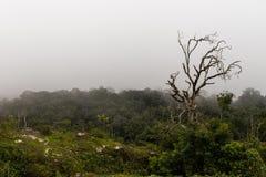 Avlövat träd i skog Royaltyfri Fotografi