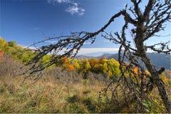 Avlövat träd på en nedgångbakgrund arkivbild