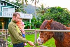 Avla med hans lilla dotter som matar en häst Fotografering för Bildbyråer