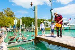 Avla och två pojkar för liten unge som matar fiskar och pelikan Fotografering för Bildbyråer