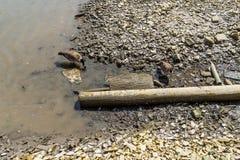 Avloppsvatten förorening, global uppvärmning, dåligt liv, duckar royaltyfri fotografi
