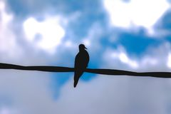 Avoante silhueted contro cielo blu fotografie stock