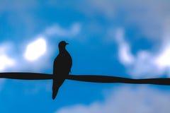 Avoante silhueted contro cielo blu fotografia stock