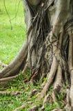 Avobe todo da árvore Imagens de Stock