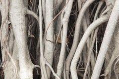 Avobe todo da árvore Imagem de Stock