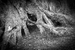 Avobe todo da árvore Fotografia de Stock