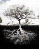 Avobe todo da árvore fotografia de stock royalty free