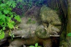 Avobe todo del árbol Fotos de archivo