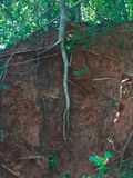 Avobe todo del árbol Imagen de archivo