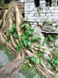 Avobe todo del árbol Foto de archivo libre de regalías