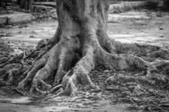 Avobe tout d'arbre Image stock