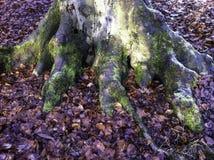 Avobe tout d'arbre Photos stock