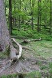 Avobe tout d'arbre Photographie stock