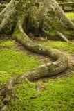 Avobe tout d'arbre Photo libre de droits
