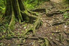 Avobe tout d'arbre Photographie stock libre de droits