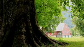Avobe tout d'arbre Grand arbre avec le champ vert photo stock