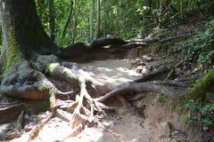 Avobe tutto dell'albero Fotografia Stock Libera da Diritti