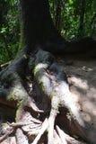 Avobe tutto dell'albero Immagini Stock Libere da Diritti