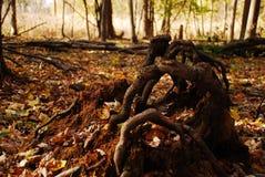 Avobe tutto dell'albero Fotografie Stock