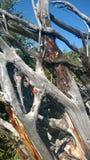 Avobe tutto dell'albero Fotografia Stock