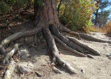 Avobe tutto dell'albero Fotografie Stock Libere da Diritti