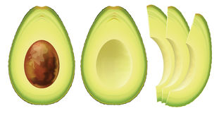 Avocado. Stock Photos