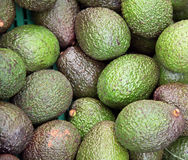 Avocado royalty free stock image