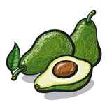 Avocado royalty-vrije illustratie