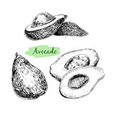 Avocado illustrazione di stock