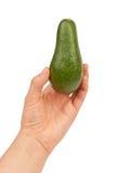 Avocado Stockfoto