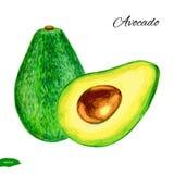 Avocado, avocado core, seed, half of avocado illustration  on white background, Hand drawn vector sketch Stock Photos