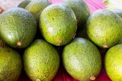 Avocado, Axarquia Màlaga, Andalusien Stockfotos