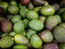 Avocado bezieht auch sich die auf Avocadobaum ` s Frucht, die botanisch eine große Beere ist, die einen einzelnen Samen enthält stockfotos