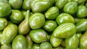 Avocado Bos van Avocado's Royalty-vrije Stock Afbeeldingen