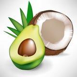 Avocado and broken coconut Stock Photos