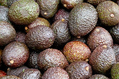 Avocado brown Royalty Free Stock Photo